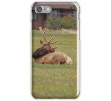 elk watching his back iPhone Case/Skin