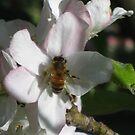 A Taste of Honey by GemmaWiseman