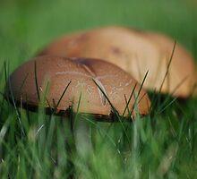 Mushrooms by AylaM
