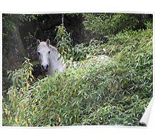 Wild White Stallion Poster