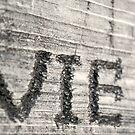 VIE by Trenton Purdy