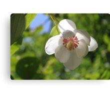 When a Magnolia flowers - JUSTART © Canvas Print