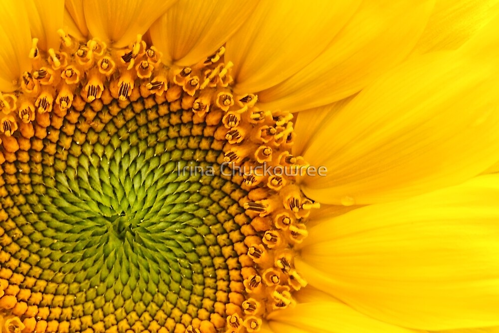Fibonacci Sequence by Irina Chuckowree