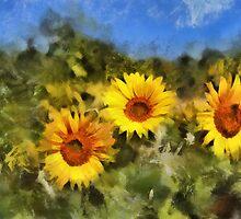 Magical Sunflowers by Shamus Macca