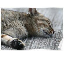 Animal: Wild Cat in the carpark Poster