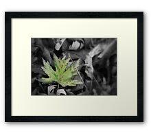 Leaf on ground Framed Print