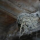 Bird's nest in an old barn by PhotoCrazy6