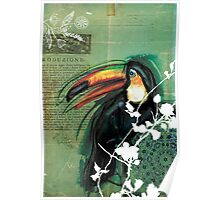 Toucan- Antique Plate- Mixed Media Poster