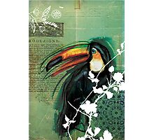 Toucan- Antique Plate- Mixed Media Photographic Print