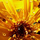 yellow and sunny by tego53