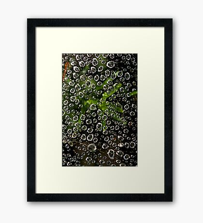 Web and Water Framed Print