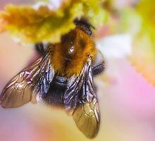 Bee by DoraBirgis