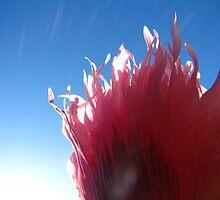 feathery zephyr by vampvamp