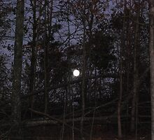 Moon Rise in the Forest by barnsis