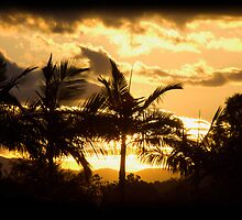 Palms in the sun by Liza Yorkston