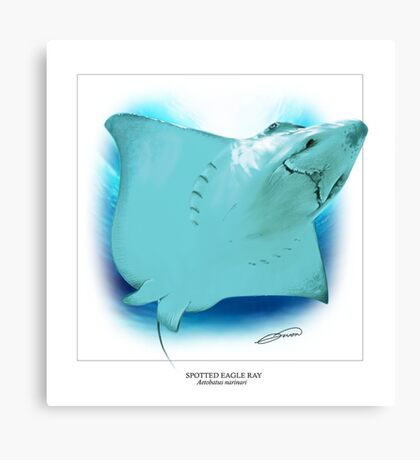 SPOTTED EAGLE RAY 5 Canvas Print