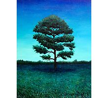 Southern Pine at Night Photographic Print