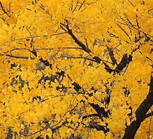 Morning Sun Lights Up Fall Color by DonnaBoley