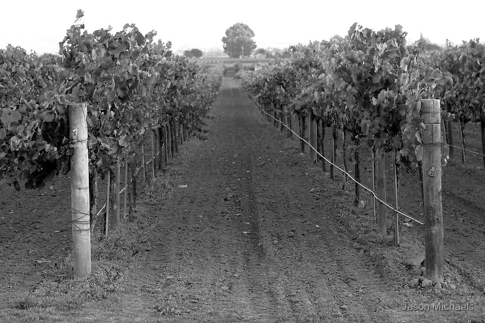 The Vines by Jason Michaels