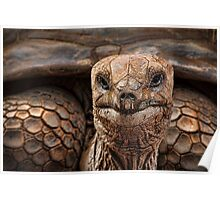 Great-great-great-grand-tortoise Poster