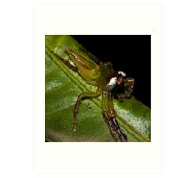 Northern Green Jumping Spider Art Print
