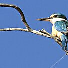 Kingfisher by Rick Playle