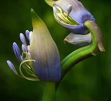 Double Delight by Dianne English