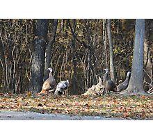Falls Feathered Friends Photographic Print