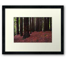 Silent Giants Framed Print