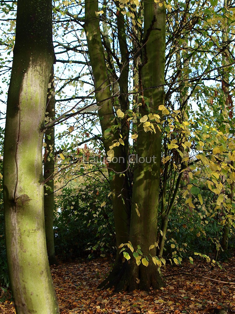 Apley woods 2 telford shropshire  by Lawson Clout