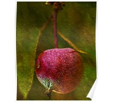 Forbidden Fruit Poster