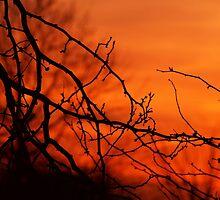 Bursting Sunset by Gaby Swanson