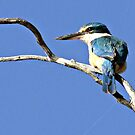 KingFisher Two by Rick Playle