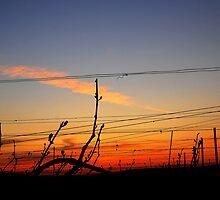Sunset in Chouilly. by Victor Pugatschew