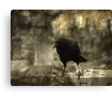 Dark And Angry Crow Canvas Print