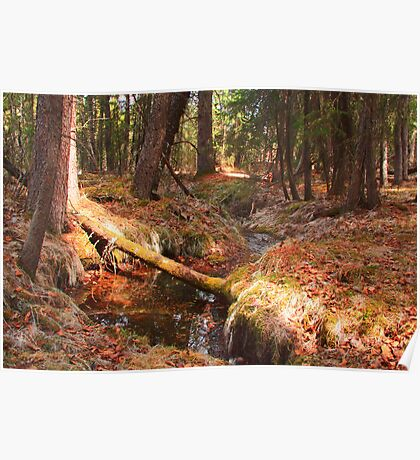 Soft forest floor Poster