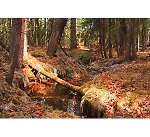Soft forest floor Photographic Print