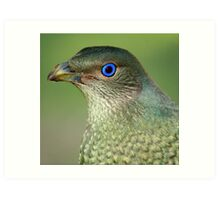 Bower Bird Female Art Print