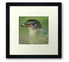 Bower Bird Female Framed Print