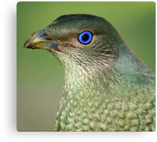 Bower Bird Female Canvas Print