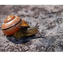Between a Rock and a Snail Pace...  Photographic Print