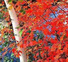 White Birch State Tree by Wanda Dumas