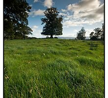 Lonely Tree in a Field by Scott A Murray