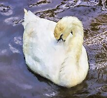 Mute Swan ~ Impressions by Susie Peek