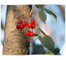 Forest fruit... Poster