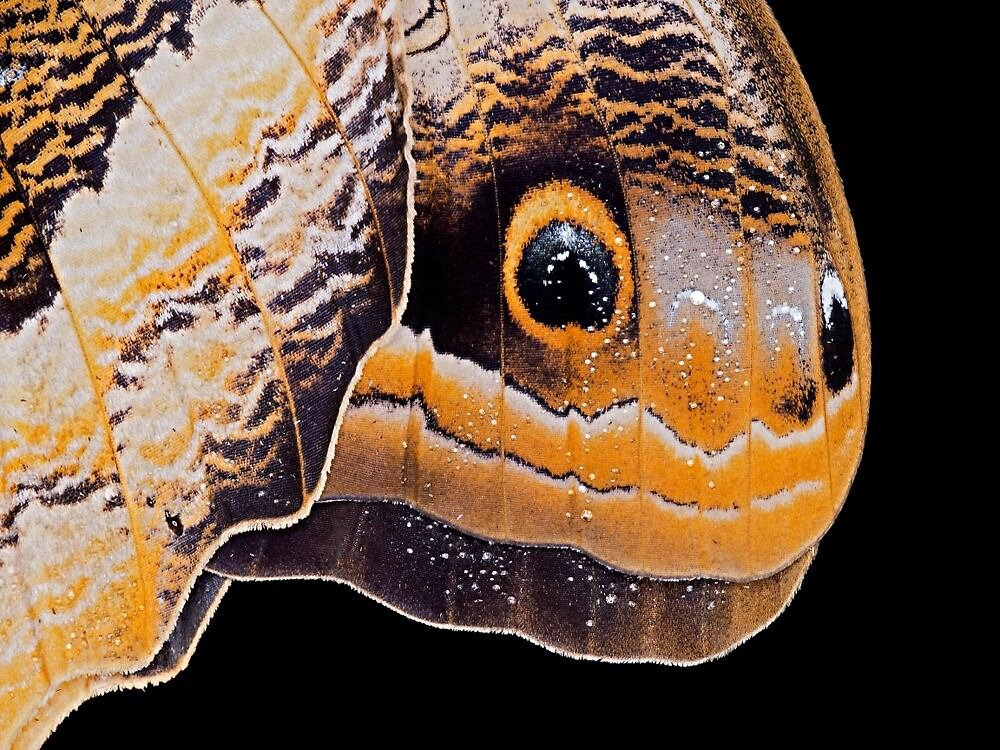 Butterfly or Snake Head by Henry Jager