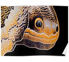 Butterfly or Snake Head Poster