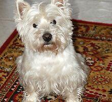 My dog crumb-5 by trainmaniac