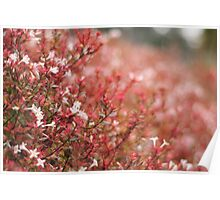 Soft Focus and Flowers Poster
