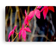 Red Red Leaves Canvas Print